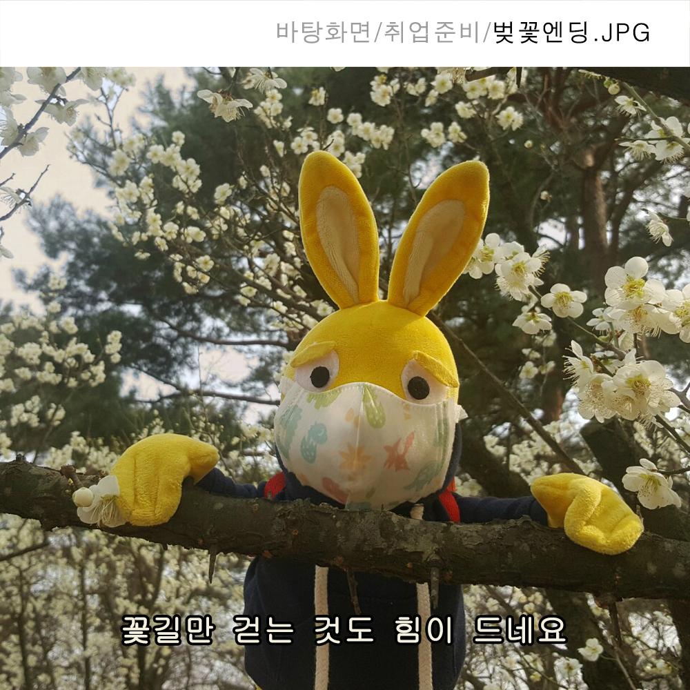 58_벚꽃구경.jpg